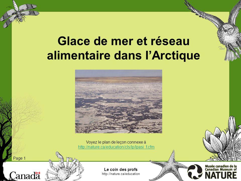 Le coin des profs http://nature.ca/education Glace de mer et réseau alimentaire dans lArctique Page 1 La glace de mer joue un rôle important dans le réseau alimentaire de lécosystème marin de lArctique.