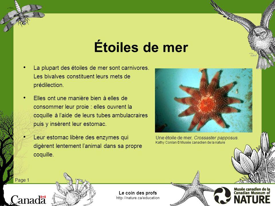 Le coin des profs http://nature.ca/education Morues polaires Page 1 Les morues polaires se nourrissent essentiellement de crustacés comme les crevettes, les amphipodes et les copépodes.