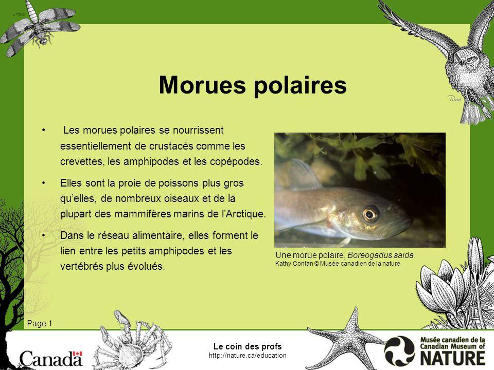 Le coin des profs http://nature.ca/education Morses Page 1 Les morses affectionnent les mollusques, en particulier les bivalves comme les myes et les moules, quils aspirent à même la coquille.