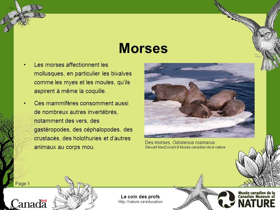 Le coin des profs http://nature.ca/education Phoques annelés Page 1 Il sagit de lespèce de phoque la plus abondante dans lArctique.