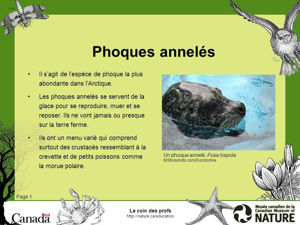 Le coin des profs http://nature.ca/education Bélugas Page 1 Les bélugas fréquentent généralement les eaux couvertes de glace.