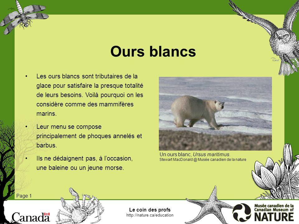 Le coin des profs http://nature.ca/education Glace de mer et réseau alimentaire dans lArctique Page 1 Lécosystème marin de lArctique est plus fragile que les écosystèmes plus complexes situés plus au sud.