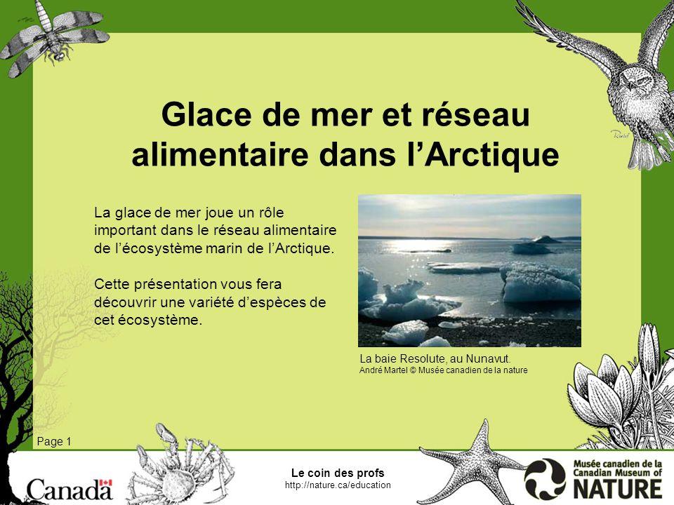 Le coin des profs http://nature.ca/education Carottes de glace Page 1 Dans lArctique, la face inférieure de la glace de mer constitue lhabitat dune communauté formée dalgues et dorganismes microscopiques appelés sympagiques.