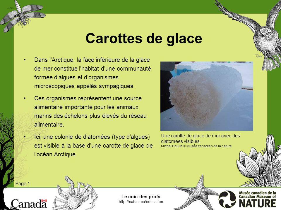 Le coin des profs http://nature.ca/education Page 1 Base du réseau alimentaire Le réseau alimentaire des océans se fonde principalement sur le phytoplancton, ensemble de plantes microscopiques qui vivent normalement dans leau.