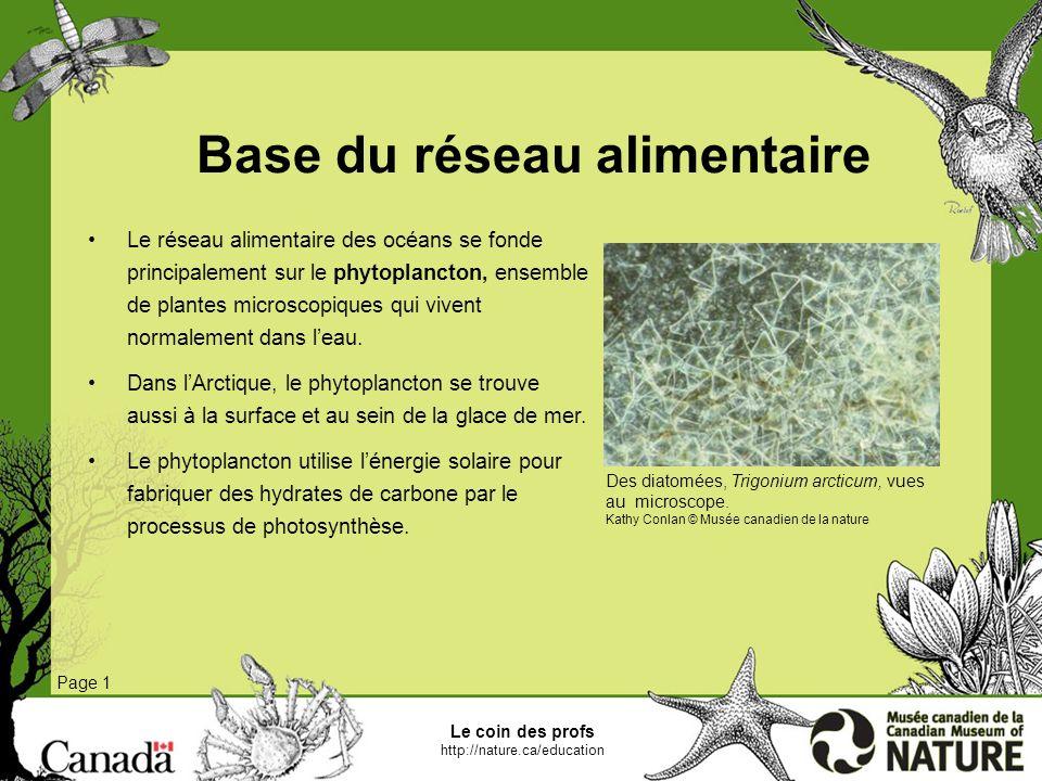 Zooplancton Ce processus produit une réserve de nourriture pour un groupe de minuscules animaux appelé zooplancton.
