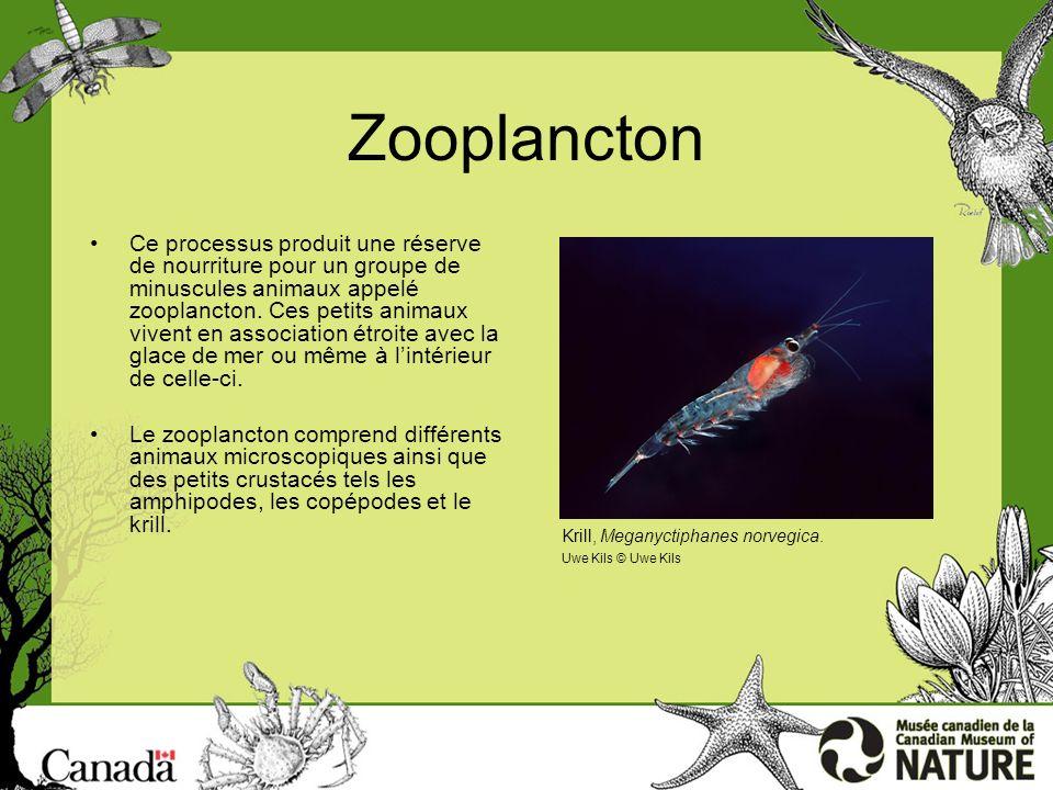 Le coin des profs http://nature.ca/education Amphipodes Page 1 Les amphipodes sont de petits crustacés qui ressemblent à des crevettes.