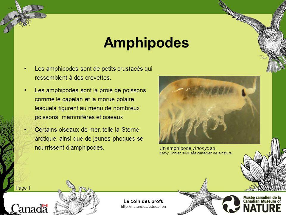 Le coin des profs http://nature.ca/education Isopodes Page 1 Les isopodes forment un groupe de crustacés très diversifié.