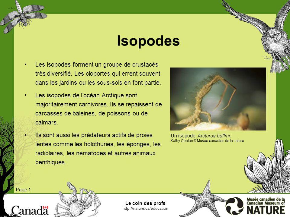 Le coin des profs http://nature.ca/education Coques Page 1 La coque est un bivalve, cest-à-dire un animal contenu dans une coquille formée de deux moitiés.