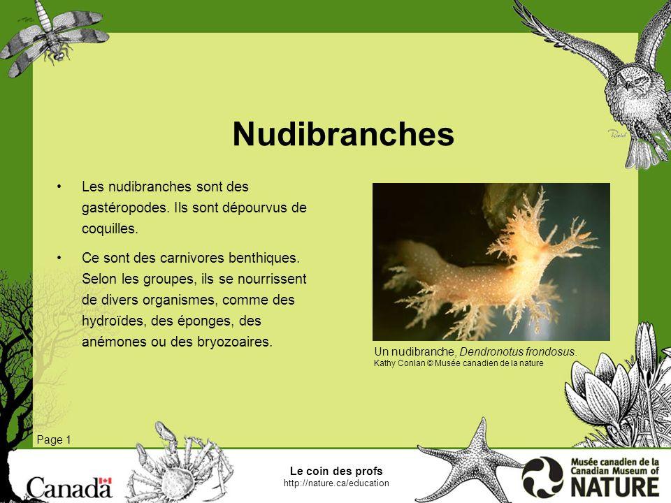 Le coin des profs http://nature.ca/education Holothuries Page 1 Les holothuries ou concombres de mer appartiennent au phylum des échinodermes.