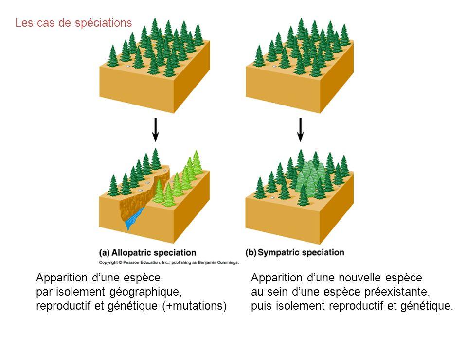 Apparition dune espèce par isolement géographique, reproductif et génétique (+mutations) Apparition dune nouvelle espèce au sein dune espèce préexista