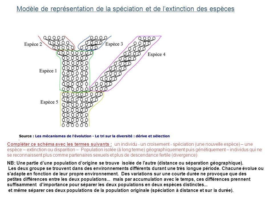 Modèle de représentation de la spéciation et de lextinction des espèces NB: Une partie dune population dorigine se trouve isolée de l'autre (distance