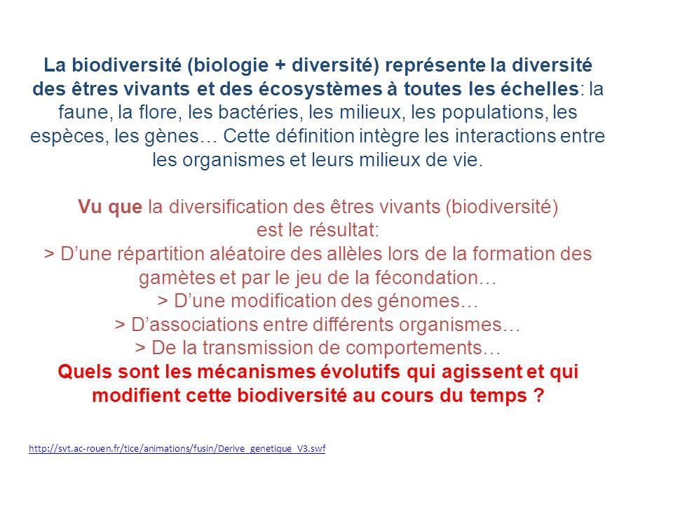 http://svt.ac-rouen.fr/tice/animations/fusin/Derive_genetique_V3.swf La biodiversité (biologie + diversité) représente la diversité des êtres vivants