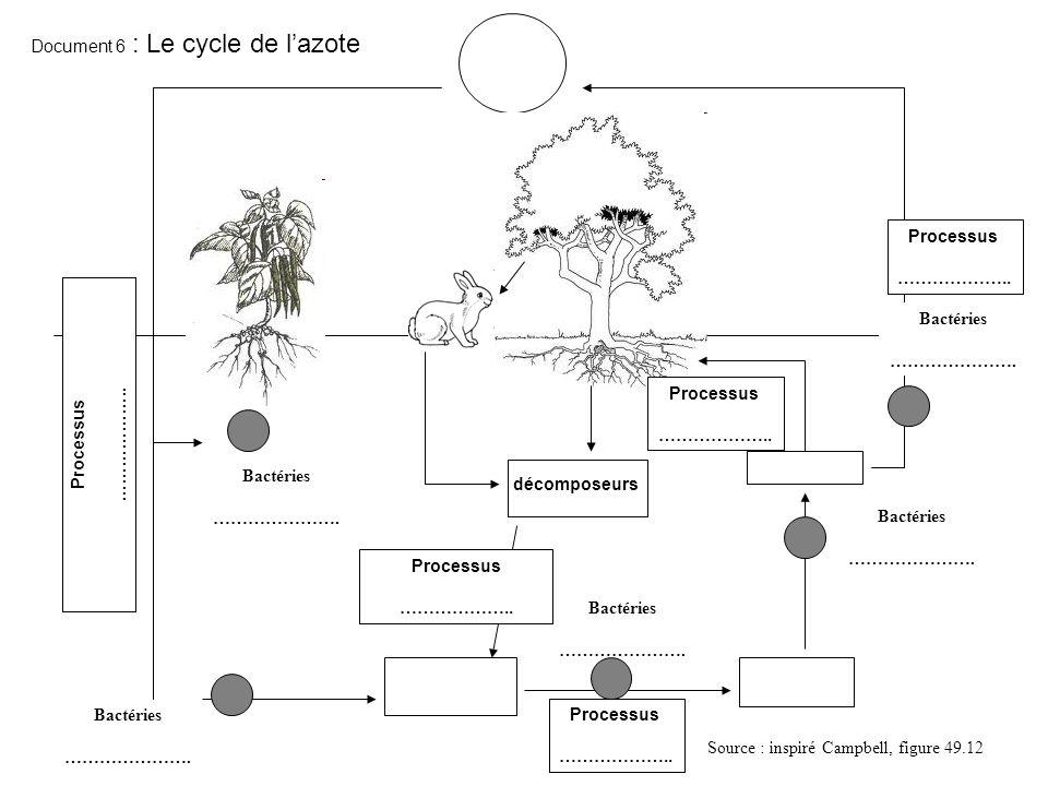 Bactéries …………………. Bactéries …………………. Bactéries …………………. Bactéries …………………. Bactéries …………………. Document 6 : Le cycle de lazote Source : inspiré Campbe