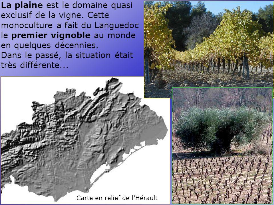 Carte en relief de lHérault La plaine est le domaine quasi exclusif de la vigne.