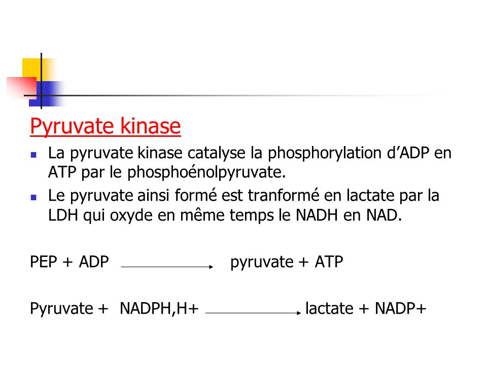 Pyruvate kinase La pyruvate kinase catalyse la phosphorylation dADP en ATP par le phosphoénolpyruvate. Le pyruvate ainsi formé est tranformé en lactat