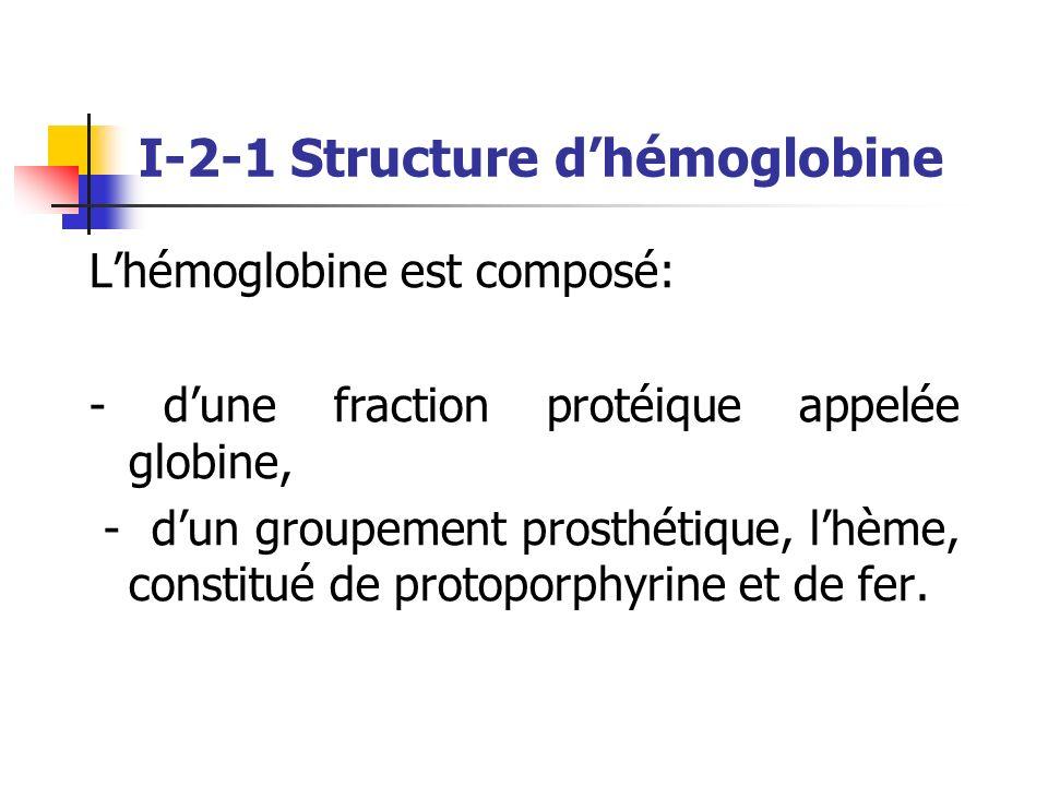 Lhémoglobine est composé: - dune fraction protéique appelée globine, - dun groupement prosthétique, lhème, constitué de protoporphyrine et de fer. I-2