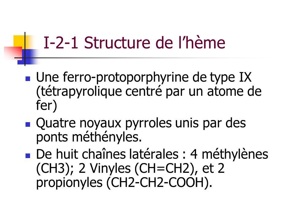 I-2-1 Structure de lhème Une ferro-protoporphyrine de type IX (tétrapyrolique centré par un atome de fer) Quatre noyaux pyrroles unis par des ponts mé