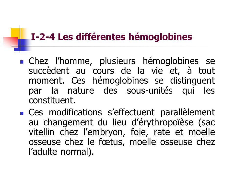 I-2-4 Les différentes hémoglobines Chez lhomme, plusieurs hémoglobines se succèdent au cours de la vie et, à tout moment. Ces hémoglobines se distingu