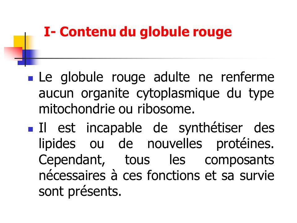 Le globule rouge adulte ne renferme aucun organite cytoplasmique du type mitochondrie ou ribosome. Il est incapable de synthétiser des lipides ou de n