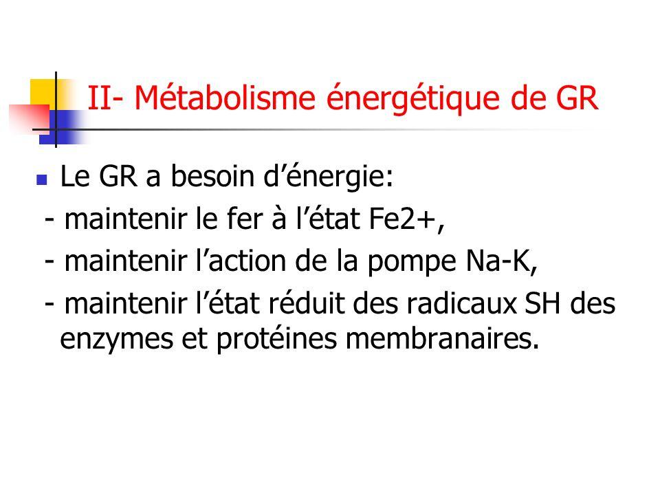 II- Métabolisme énergétique de GR Le GR a besoin dénergie: - maintenir le fer à létat Fe2+, - maintenir laction de la pompe Na-K, - maintenir létat ré