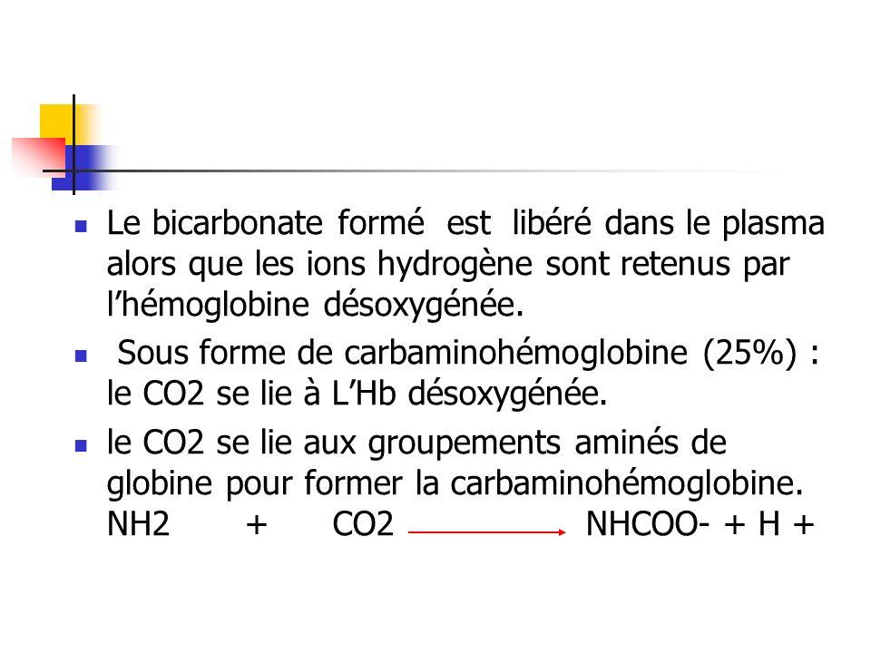 Le bicarbonate formé est libéré dans le plasma alors que les ions hydrogène sont retenus par lhémoglobine désoxygénée. Sous forme de carbaminohémoglob
