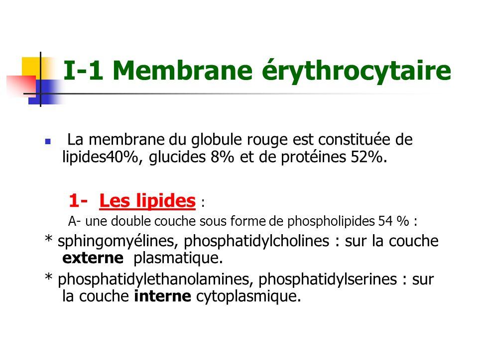 B- Anomalies de la forme du GR B-1 Sphérocyte Petits GR ne possédant pas de zone clair - Nombreux dans la sphérocytose héréditaire.