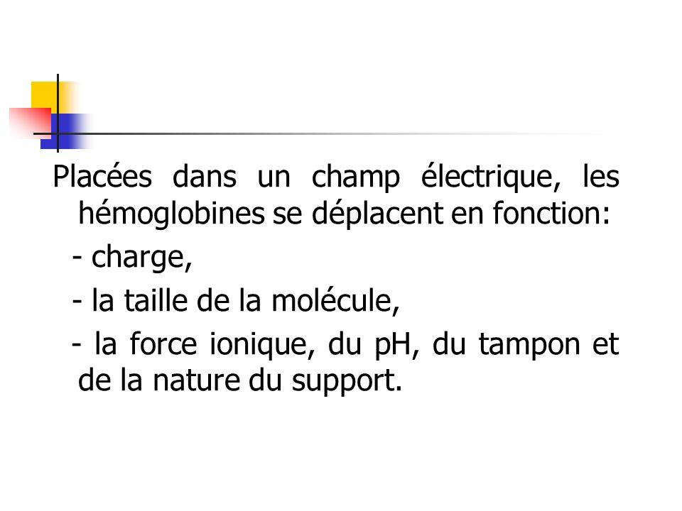 Placées dans un champ électrique, les hémoglobines se déplacent en fonction: - charge, - la taille de la molécule, - la force ionique, du pH, du tampo