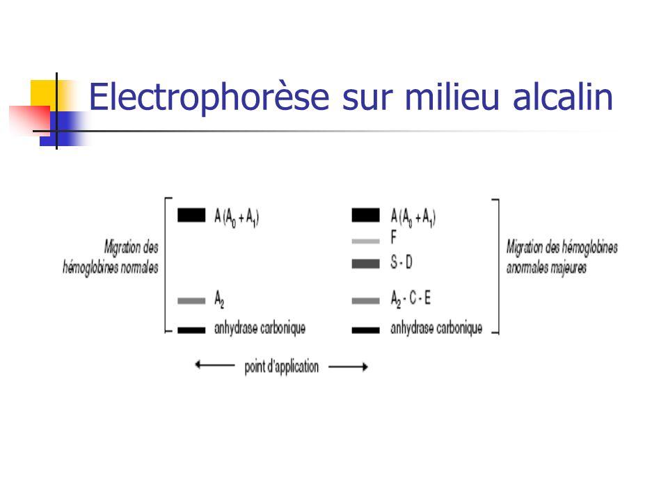 Electrophorèse sur milieu alcalin