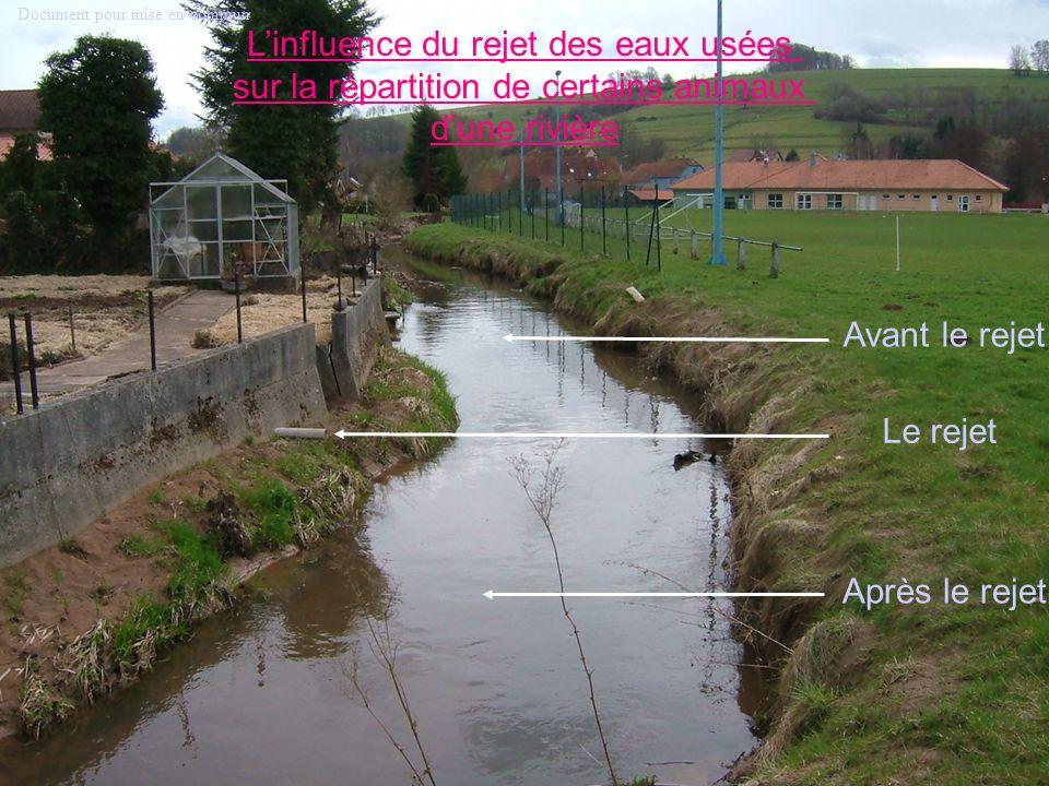 Le rejet Après le rejet Avant le rejet Linfluence du rejet des eaux usées sur la répartition de certains animaux dune rivière Document pour mise en co