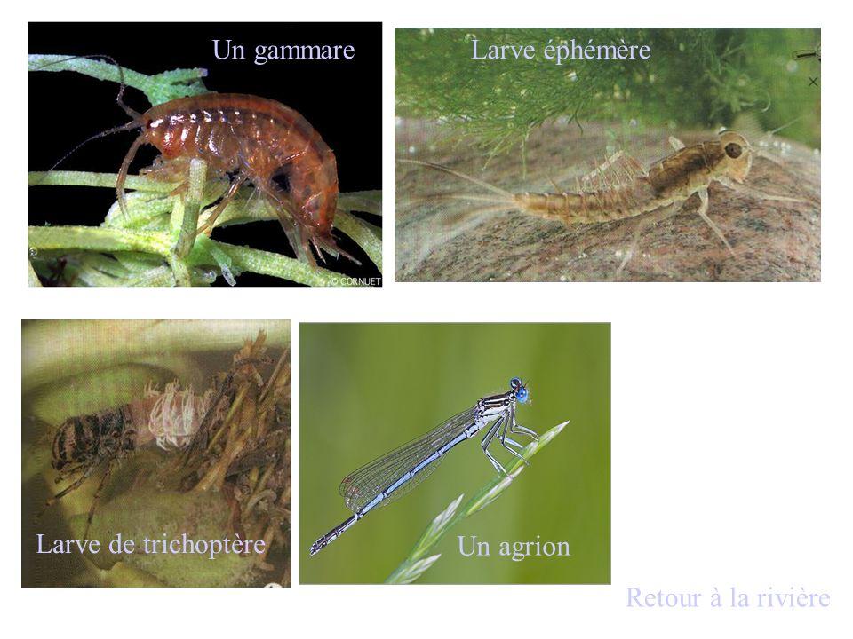 Les animaux Beaucoup de matière organique Beaucoup de bactéries Peu de dioxygène Cliquer pour découvrir les caractéristiques