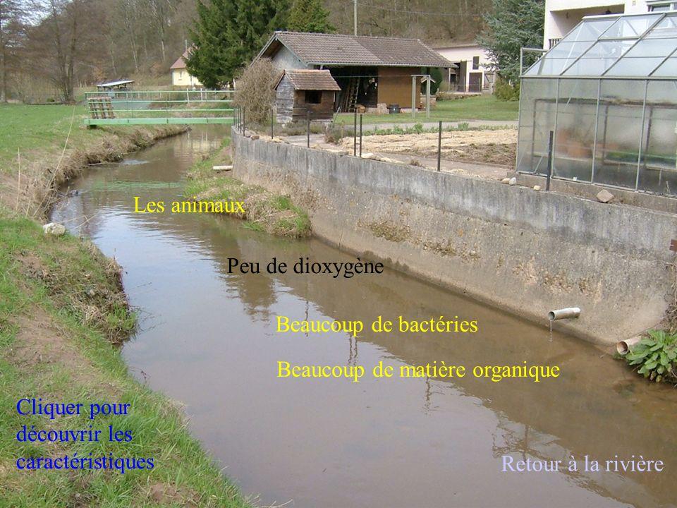 Un tubifex Larve de chironome Une aselle Retour à la rivière
