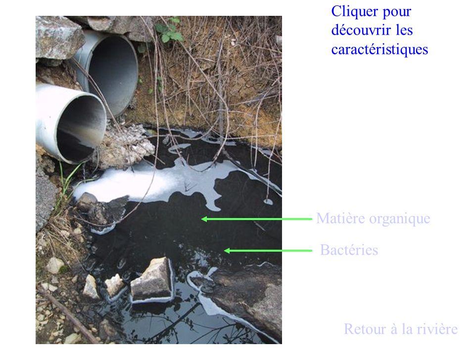 Matière organique Bactéries Cliquer pour découvrir les caractéristiques Retour à la rivière
