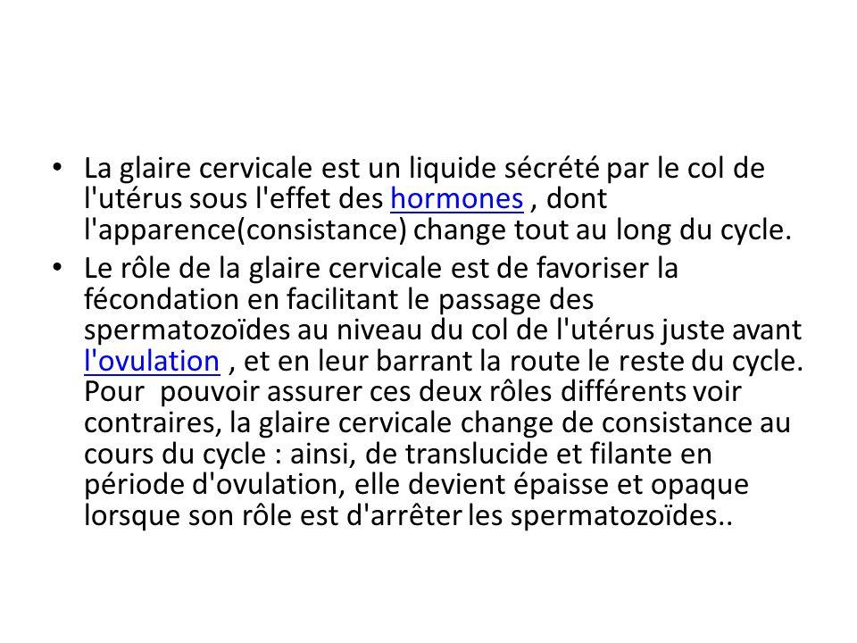 La glaire cervicale est un liquide sécrété par le col de l'utérus sous l'effet des hormones, dont l'apparence(consistance) change tout au long du cycl