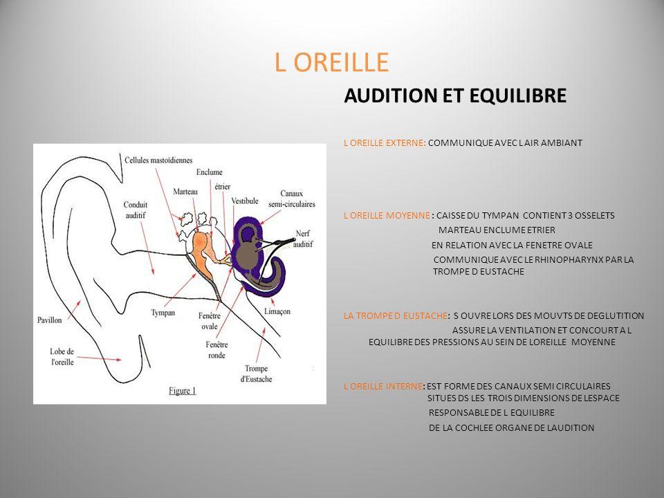 L OREILLE AUDITION ET EQUILIBRE L OREILLE EXTERNE: COMMUNIQUE AVEC L AIR AMBIANT L OREILLE MOYENNE : CAISSE DU TYMPAN CONTIENT 3 OSSELETS MARTEAU ENCL