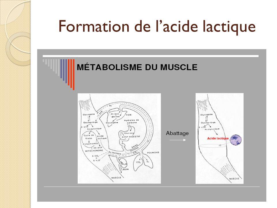Formation de lacide lactique