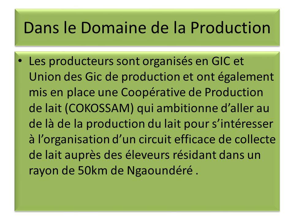 Dans le Domaine de la Production Les producteurs sont organisés en GIC et Union des Gic de production et ont également mis en place une Coopérative de Production de lait (COKOSSAM) qui ambitionne daller au de là de la production du lait pour sintéresser à lorganisation dun circuit efficace de collecte de lait auprès des éleveurs résidant dans un rayon de 50km de Ngaoundéré.