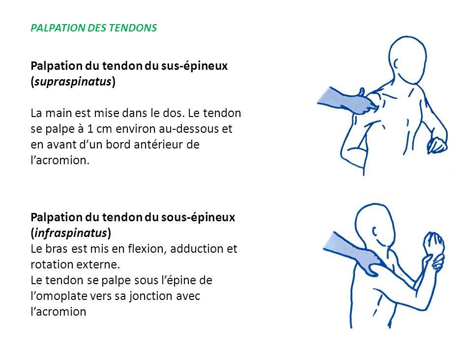 Palpation du tendon du sus-épineux (supraspinatus) La main est mise dans le dos. Le tendon se palpe à 1 cm environ au-dessous et en avant dun bord ant