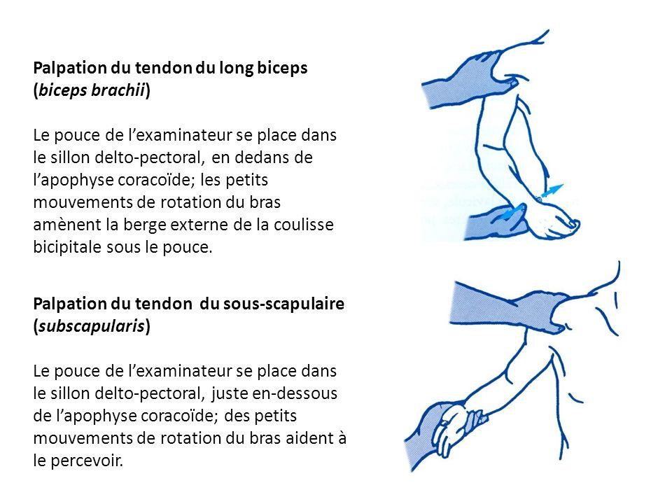 Palpation du tendon du long biceps (biceps brachii) Le pouce de lexaminateur se place dans le sillon delto-pectoral, en dedans de lapophyse coracoïde;