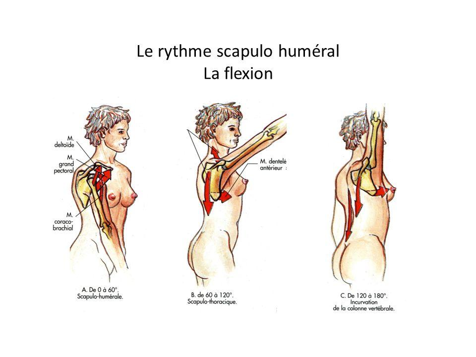 Palpation du tendon du sus-épineux (supraspinatus) La main est mise dans le dos.