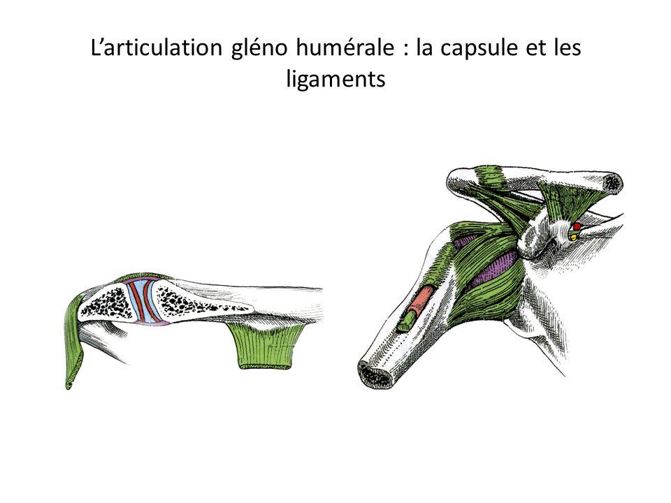Larticulation gléno humérale : la capsule et les ligaments