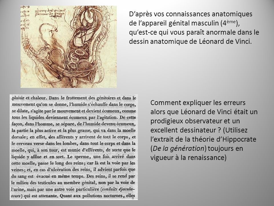 Daprès vos connaissances anatomiques de lappareil génital masculin (4 ème ), quest-ce qui vous paraît anormale dans le dessin anatomique de Léonard de Vinci.