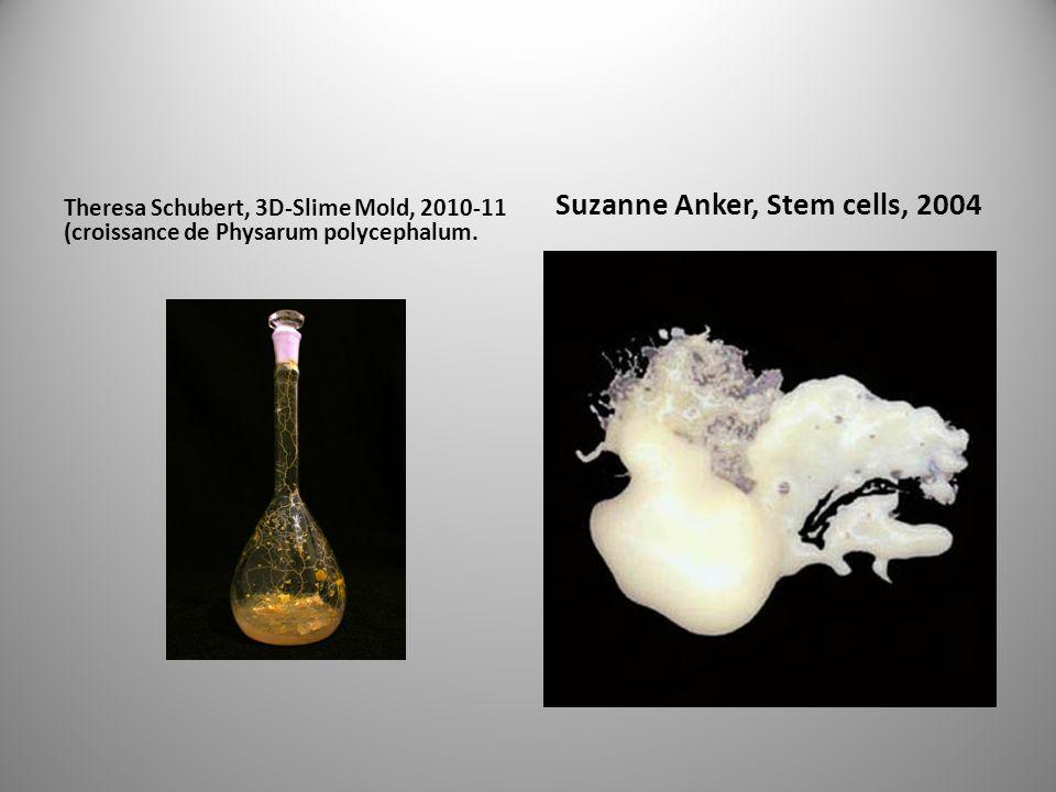 Theresa Schubert, 3D-Slime Mold, 2010-11 (croissance de Physarum polycephalum.