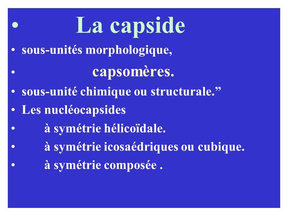 La capside sous-unités morphologique, capsomères. sous-unité chimique ou structurale. Les nucléocapsides à symétrie hélicoïdale. à symétrie icosaédriq