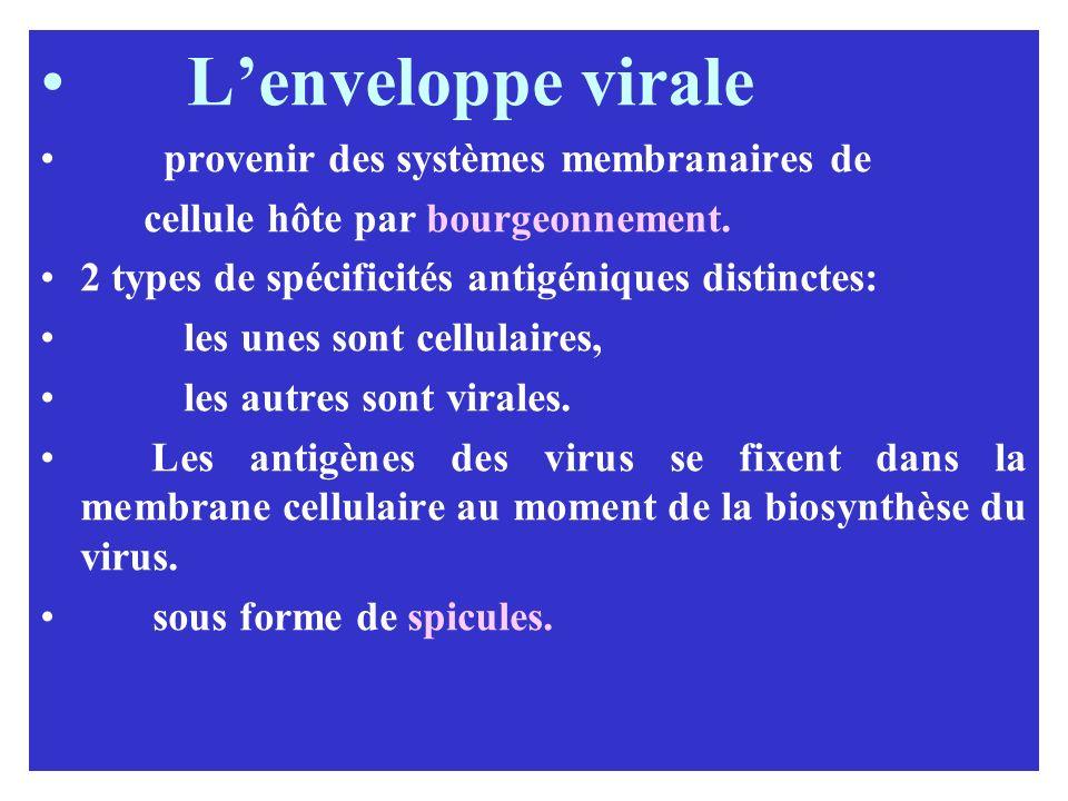 Lenveloppe virale provenir des systèmes membranaires de cellule hôte par bourgeonnement. 2 types de spécificités antigéniques distinctes: les unes son