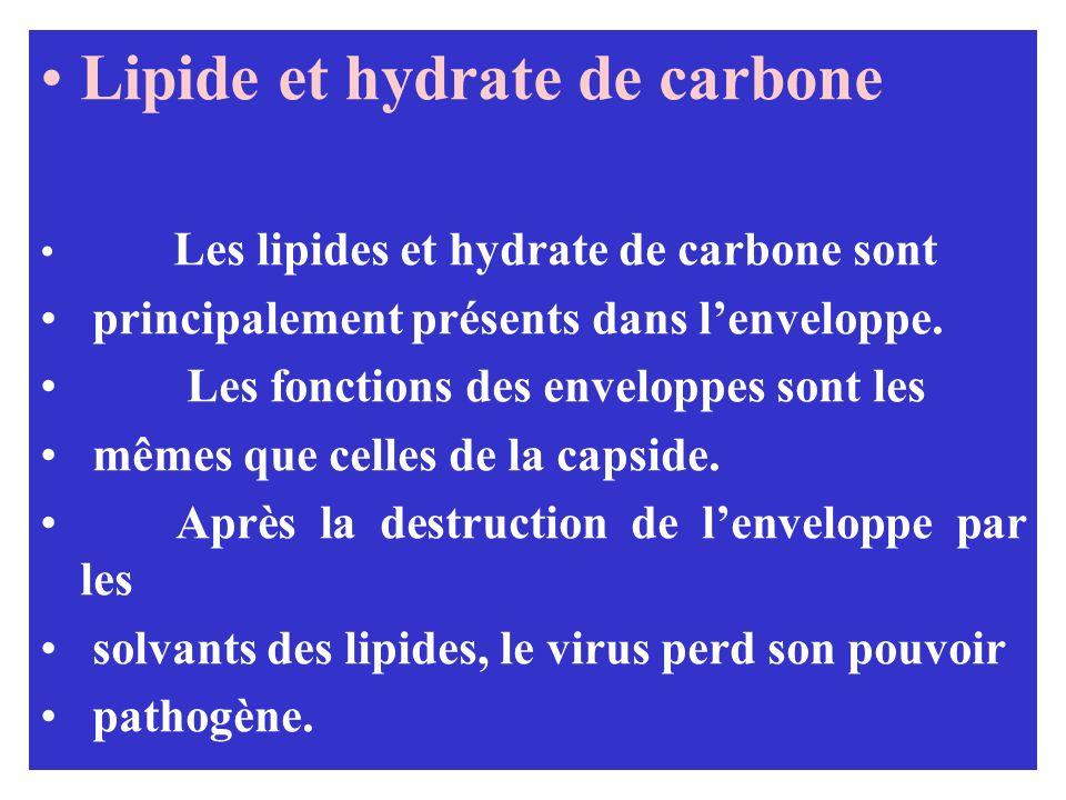 Lipide et hydrate de carbone Les lipides et hydrate de carbone sont principalement présents dans lenveloppe. Les fonctions des enveloppes sont les mêm