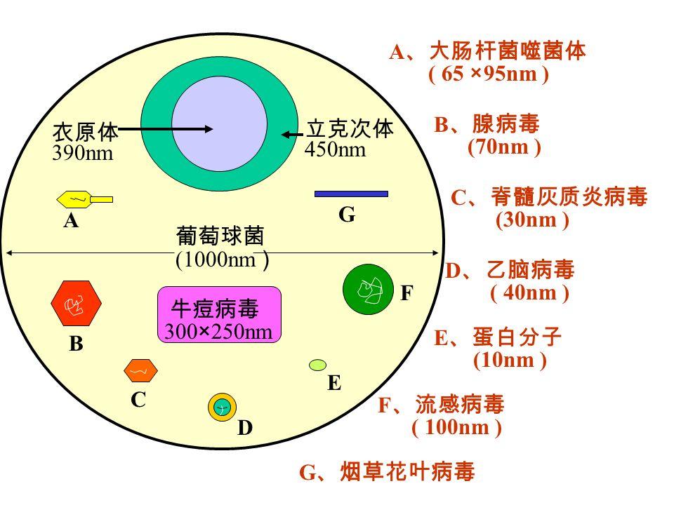 (1000nm 300×250nm A B C D E F G 450nm 390nm A ( 65 ×95nm ) B (70nm ) C (30nm ) D ( 40nm ) E (10nm ) F ( 100nm ) G