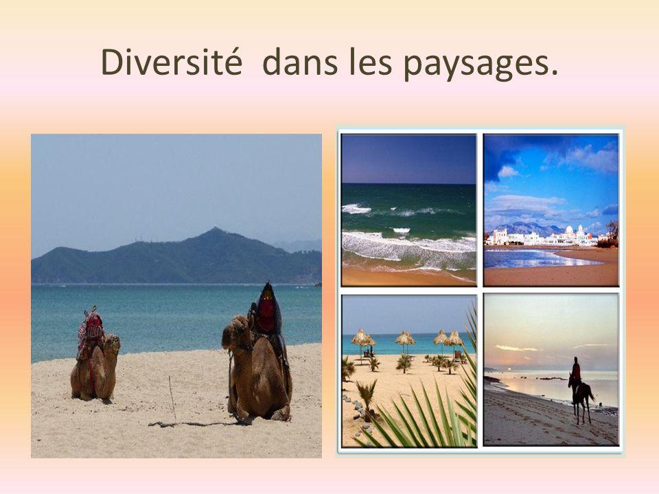 Diversité dans les paysages.