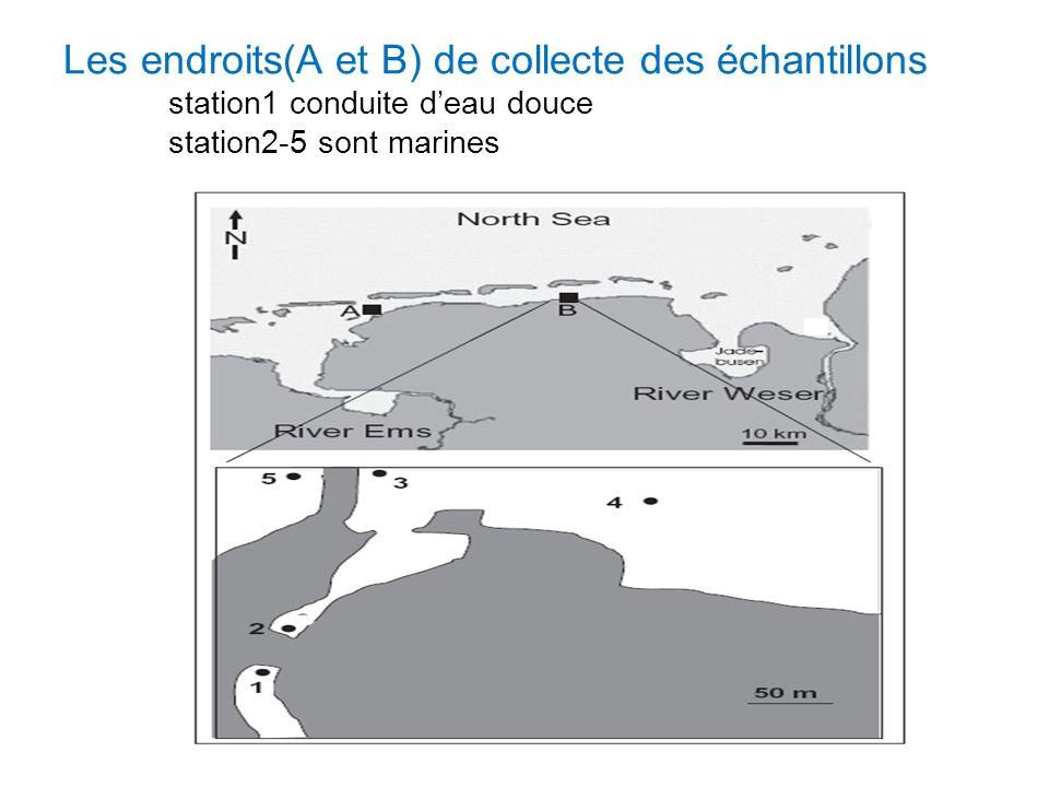 Les endroits(A et B) de collecte des échantillons station1 conduite deau douce station2-5 sont marines