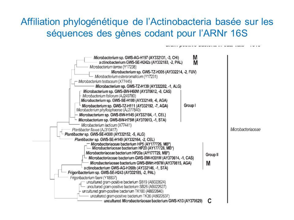 Affiliation phylogénétique de lActinobacteria basée sur les séquences des gènes codant pour lARNr 16S