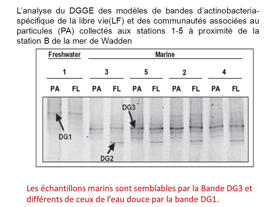 Croissance des bactéries gram+ dans divers gamme de salinité (1 – 45 ) La majorité des groupes de bactéries gram+ semble bien croître différemment dans les gammes de salinité qui avoisinent ce milieu côtier.